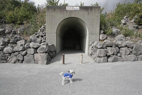 桜島噴火時の避難所