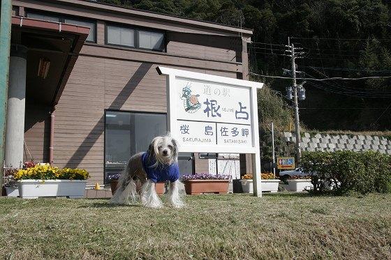 道の駅「根占(ねじめ)」