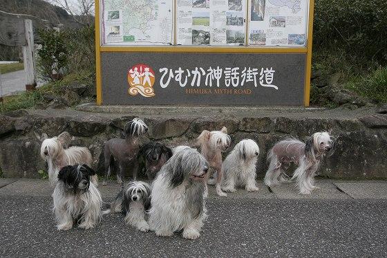 管理人の愛犬たち
